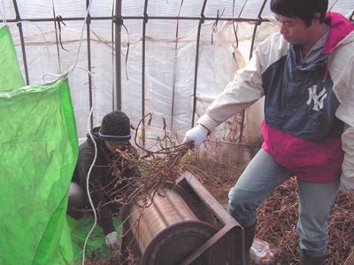七夕村で大豆を脱穀