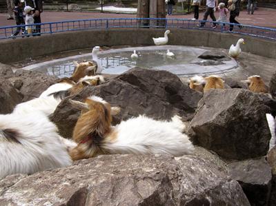 盛岡市動物公園