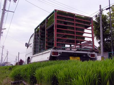 田植え2009