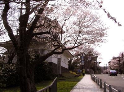 仙台の桜2009